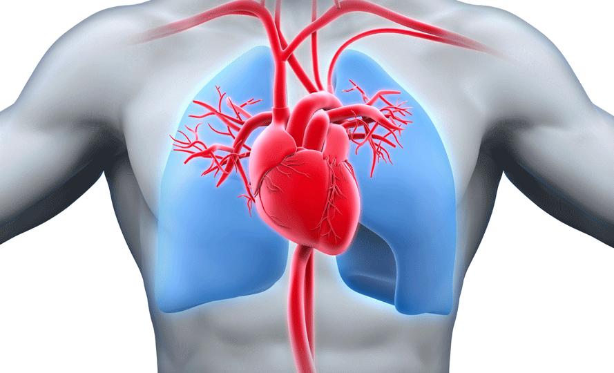 kroner kalp hastalıkları